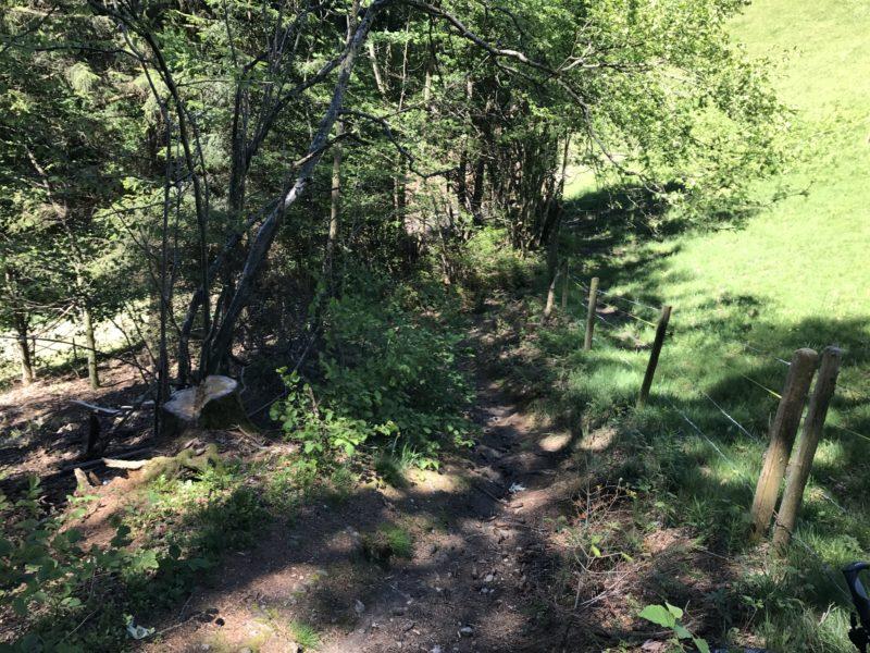 Linden Trail 02