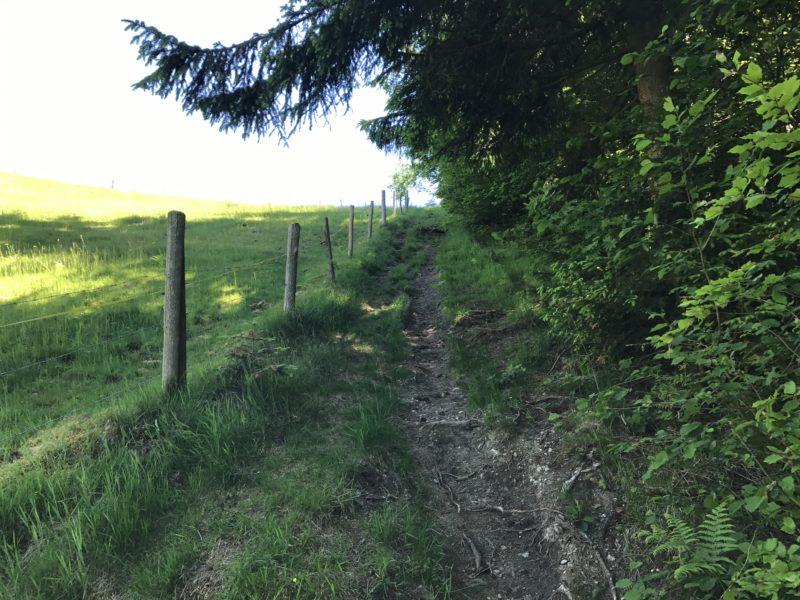 Linden Trail 01