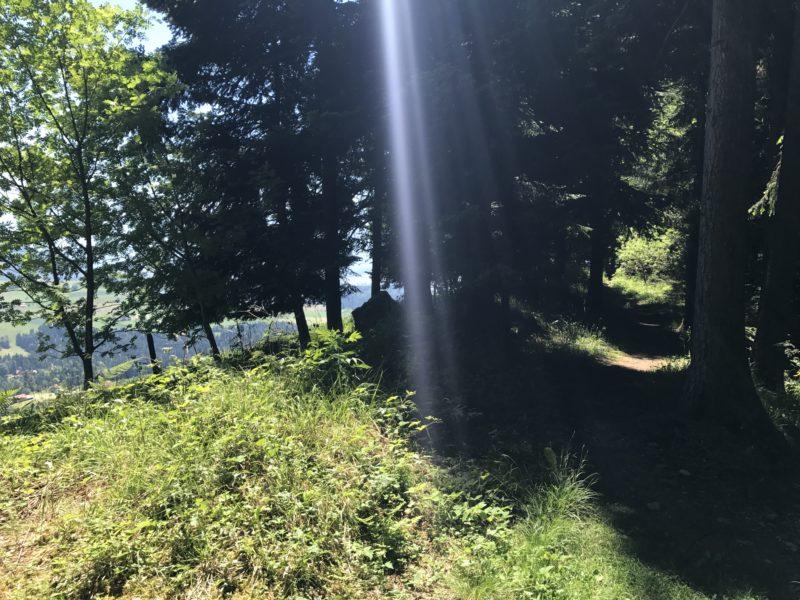 Falkenflue Trail