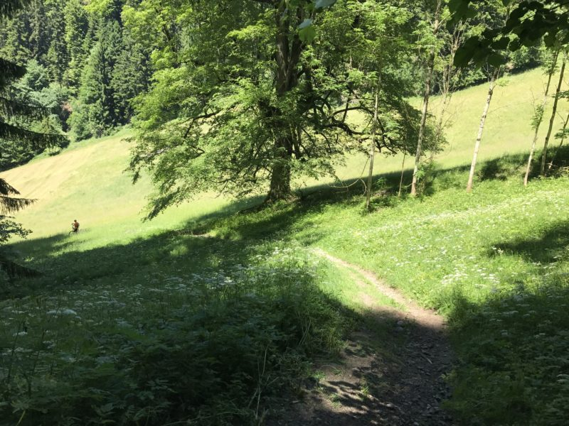 Falkenflue Trail 02