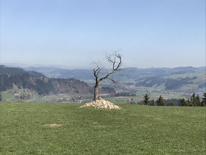 ...mein Baum!