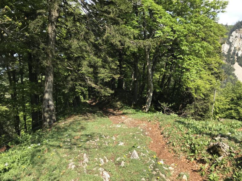 Stallflue Trail