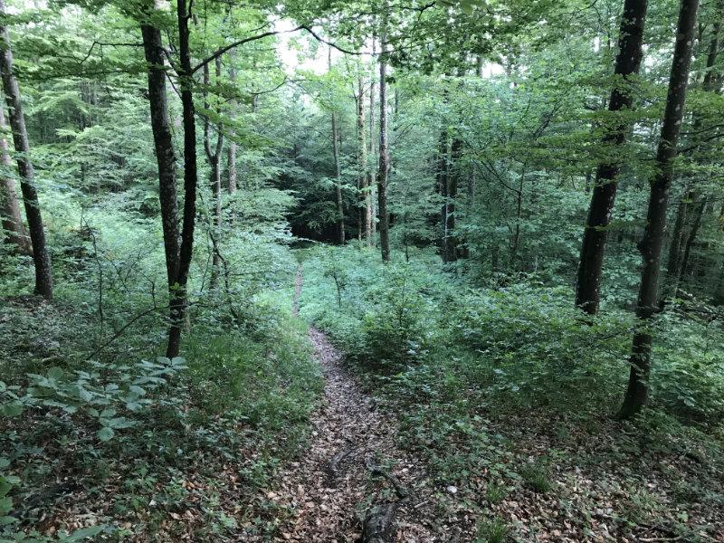 Geile Wald Trails