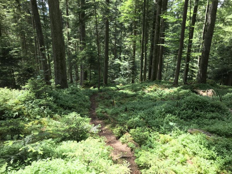 Bärbach-Trail