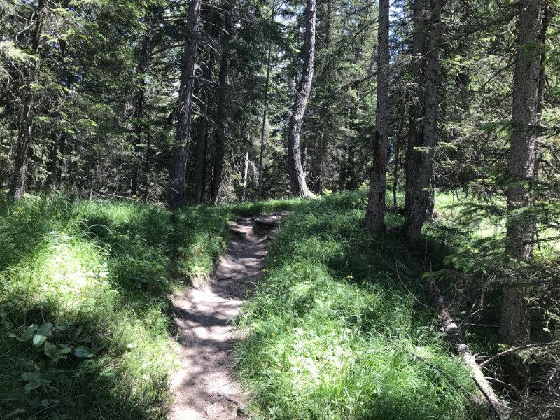 15er Trail