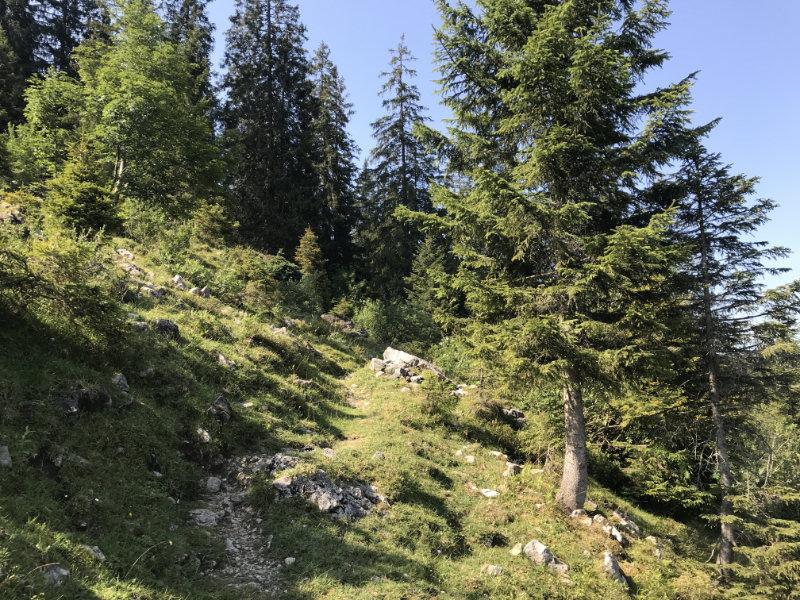 Steiniger Uphill