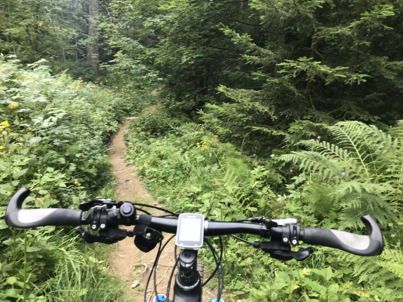 Trail im Walde