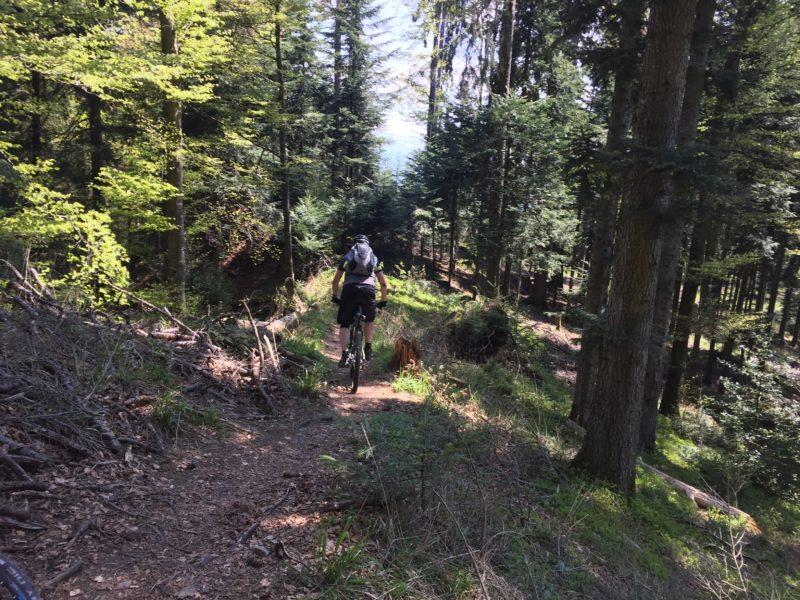 Blaseflue Trail