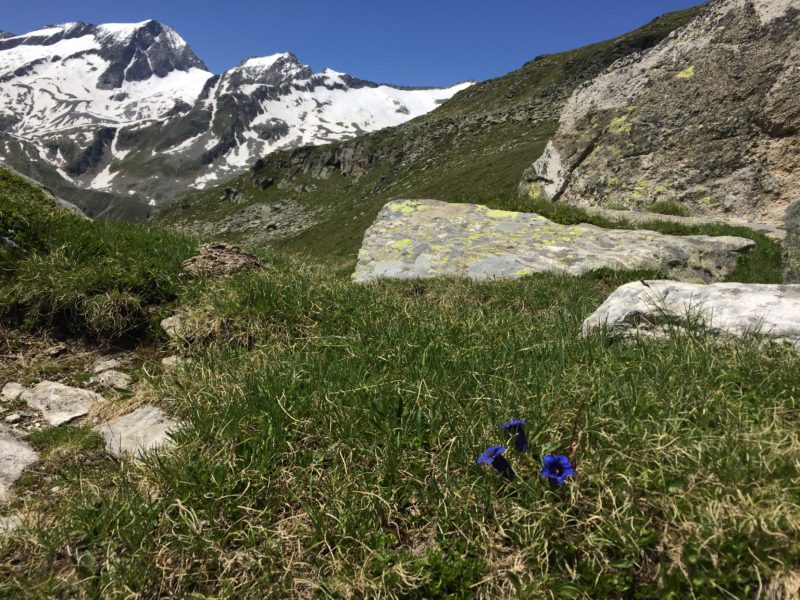 Nevesjoch Flora