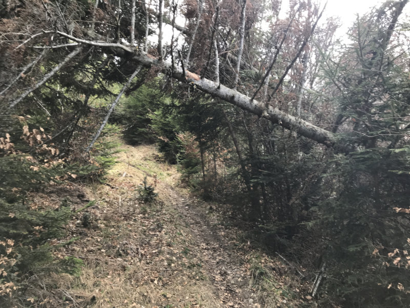 Deep Forest Trail