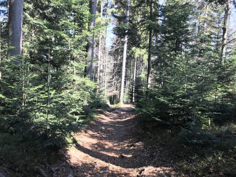 Waldhäusern Trail