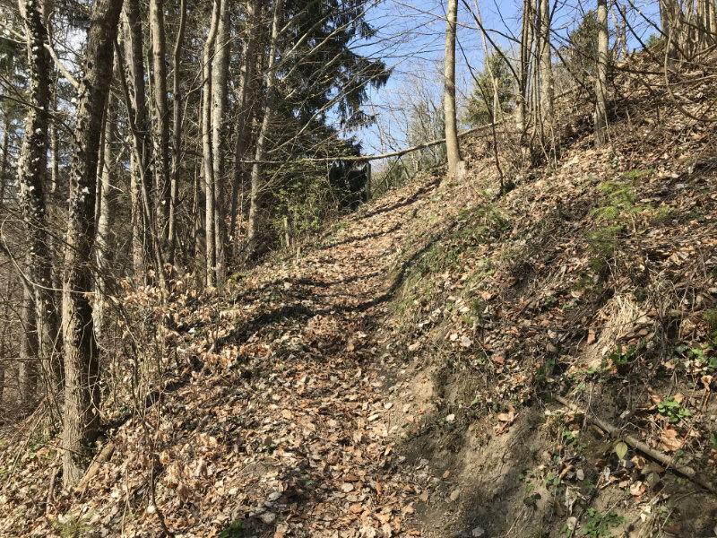Buch Trail