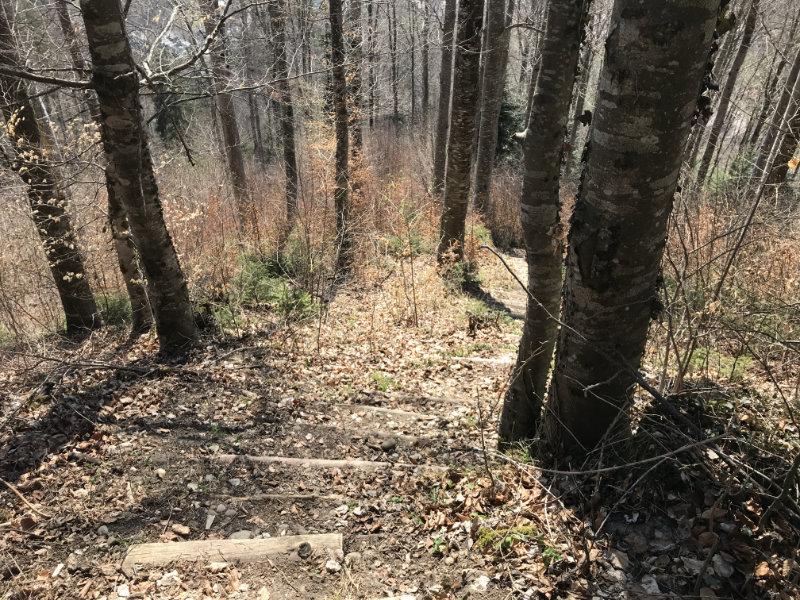 Buch Trail Stairs