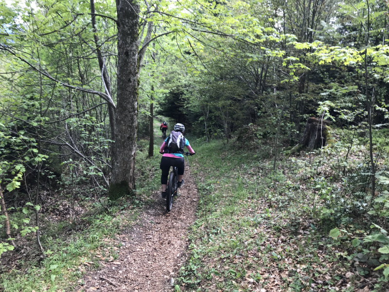Ursi on Wald Trail