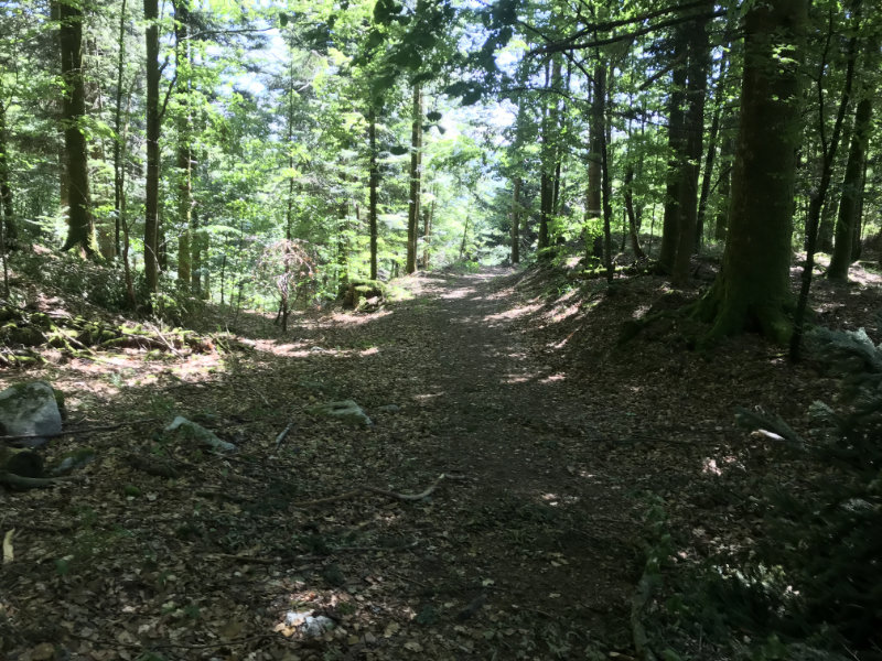 The first Trail