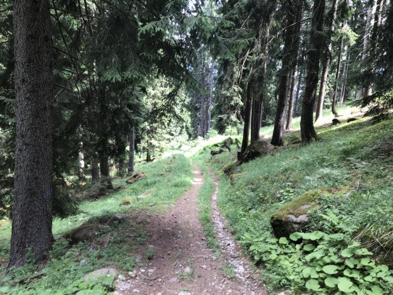 Trail Nr. 713