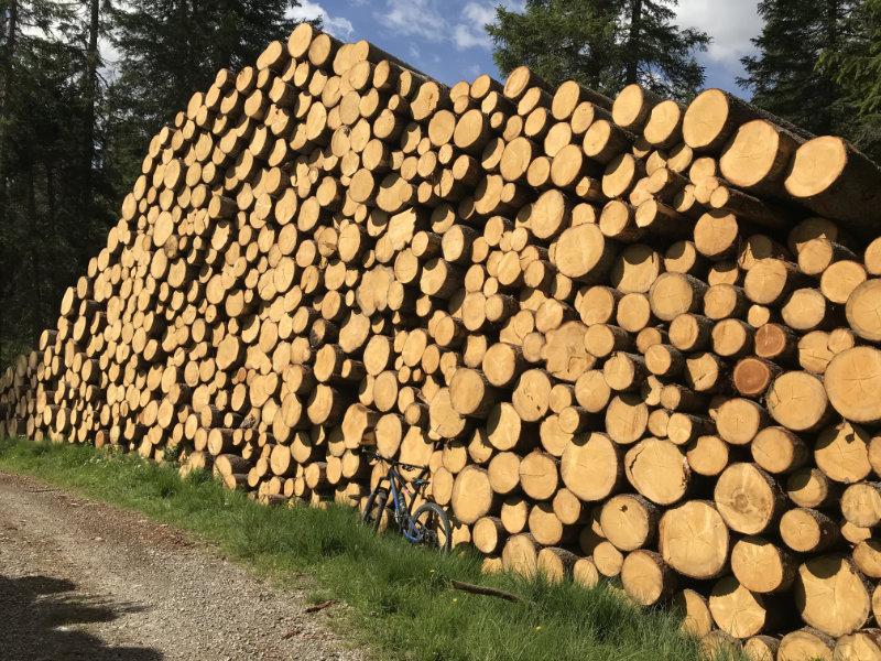 Holz, Holz, Holz....