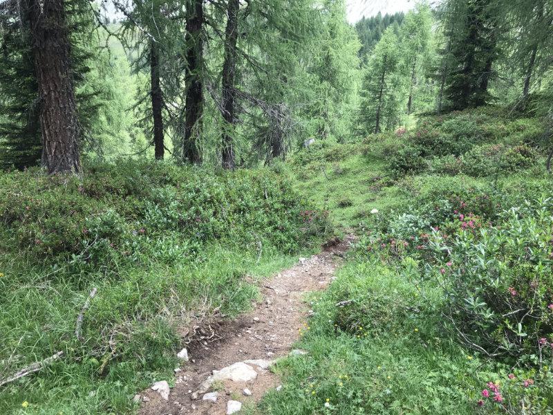 967er Trail!!!