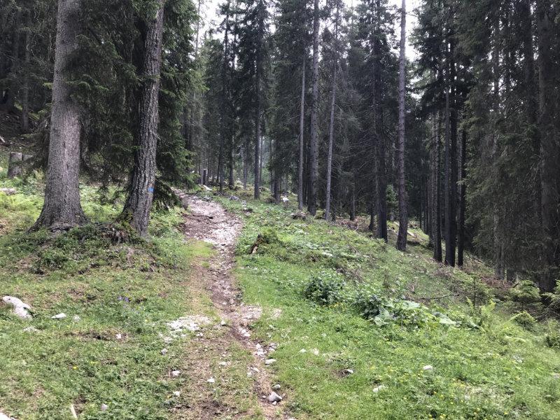 334er Trail