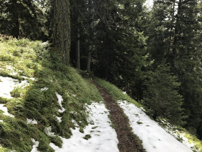 Alpinum Trail