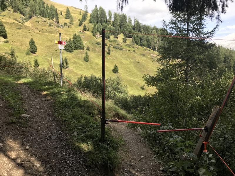 Enter the Stafelalp-Trail