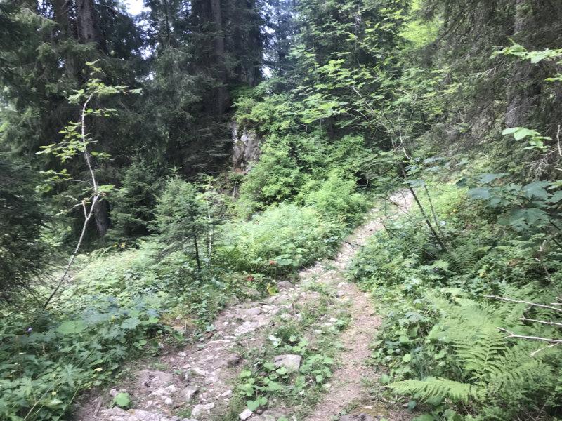 Zettenalpegg Downhill
