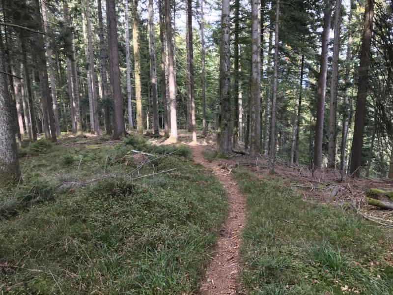 Edge Trail