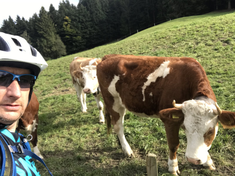 Selfie with Cows